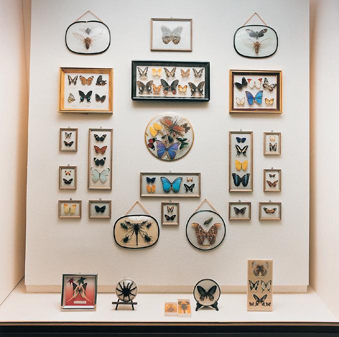 자연사 박물관 - 12 자연사 박물관, 2001