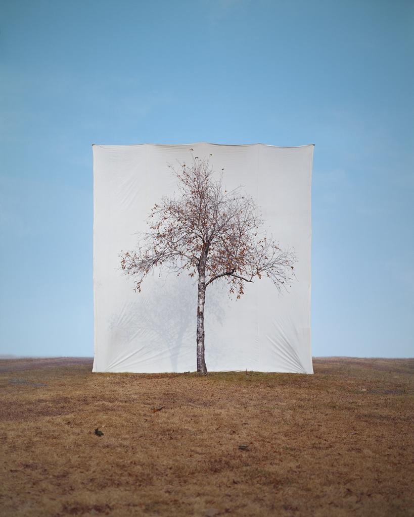 Tree - Tree #1